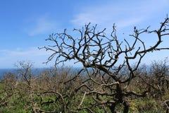 Oude Bomen, Aardscène, Achtergrond Royalty-vrije Stock Afbeeldingen