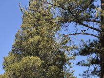 Oude bomen in de lente stock afbeelding