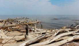 Oude bomen die bij de kust in Letland leggen Royalty-vrije Stock Fotografie