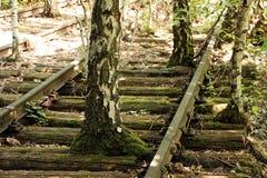 Oude bomen die door een spoorweg groeien Stock Foto's