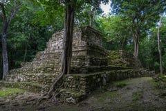 Oude bomen die op oude Maya tempel complex in Muil Chunyax groeien Royalty-vrije Stock Afbeelding