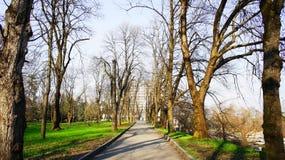 Oude bomen in het park Stock Afbeeldingen