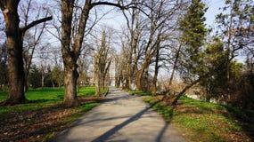 Oude bomen in het park Stock Foto