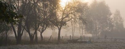 Oude bomen in nevelige ochtend Stock Afbeelding