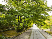 Oude bomen over steenweg Stock Fotografie