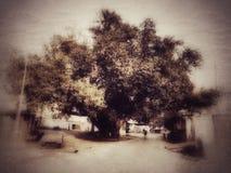 Oude boom vector illustratie