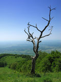 Oude boom stock afbeelding