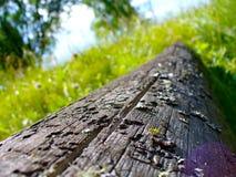 Oude boom Stock Foto