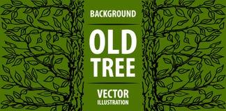 Oude boom als achtergrond Groene boom en de inschrijving op zijn boomstam Vector graphhics Royalty-vrije Stock Foto