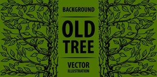 Oude boom als achtergrond Groene boom en de inschrijving op zijn boomstam Vector graphhics Stock Afbeelding