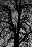 Oude boom bij zonsondergang Royalty-vrije Stock Fotografie