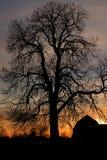Oude boom bij zonsondergang Stock Foto's