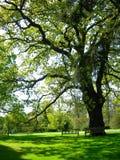 oude boom in de tuin royalty-vrije stock foto