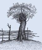 Oude boom dichtbij de omheining Royalty-vrije Stock Afbeelding