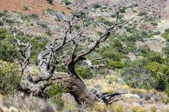 Oude boom dichtbij het waarnemingscentrum Royalty-vrije Stock Foto