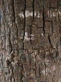 Oude boom die ruwe en bevlekte textuur tonen Stock Foto's