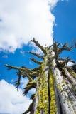 Oude boom en wolken stock foto's
