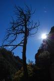Oude boom en zonneschijn in Bergen Chiricahua Stock Foto's