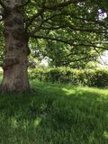 Oude boom in het de zomerplatteland Stock Fotografie