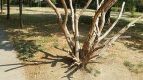 Oude boom in het park stock fotografie