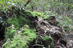 Oude boom in hout royalty-vrije stock fotografie