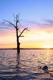 Oude boom in meer bij zonsonderganglandschap Stock Afbeeldingen