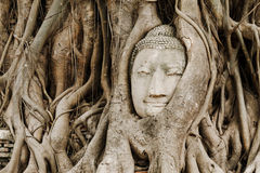 Oude boom met het hoofd van Boedha Royalty-vrije Stock Afbeelding