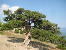 Oude boom op Bergen royalty-vrije stock fotografie