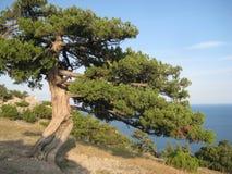 Oude boom op Bergen stock afbeelding