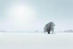 Oude boom op een gebied, de winterscène Stock Afbeeldingen