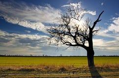 Oude boom op gebied Stock Foto