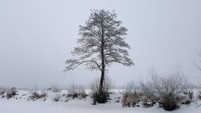 Oude boom op koude de winterdag royalty-vrije stock afbeelding