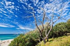 Oude boom op strand Cabarita Stock Foto's
