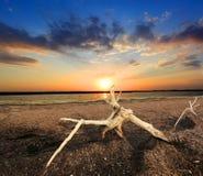 Oude boom tegen zonsondergangachtergrond royalty-vrije stock foto
