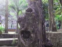 Oude boomboomstam op tuingebied met schoonheidsaard royalty-vrije stock foto's