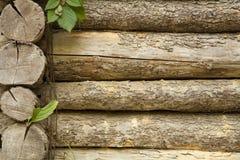 Oude boomboomstammen met bladeren Stock Foto's