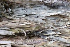 Oude boomschors met barstenclose-up, textuur, achtergrond stock foto's