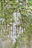 Oude boomschors met groene weide als natuurlijke achtergrond royalty-vrije stock foto's