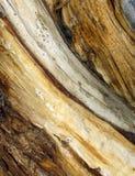 Oude boomstam Stock Afbeeldingen