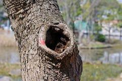 Oude boomstam met een gat stock fotografie