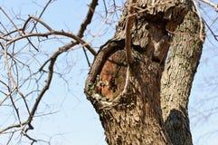 Oude boomstam met een gat stock foto