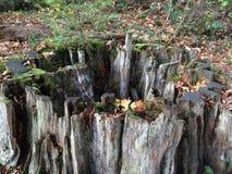 Oude boomstomp stock afbeeldingen