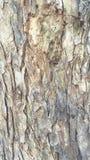 Oude boomtextuur Stock Afbeeldingen