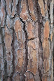 Oude boomtextuur Stock Foto's
