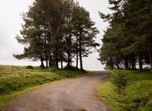 Oude bosweg op een bewolkte dag royalty-vrije stock foto
