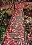 Oude brug in het bos Stock Foto's