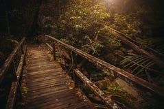 Oude Brug in wildernis Tropisch het Regenwoudlandschap van het aardregenwoud Maleisië, Azië, Borneo, Sabah stock foto