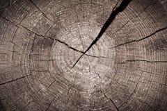 Oude bruine boomstambesnoeiing met gebarsten jaarringen Royalty-vrije Stock Afbeeldingen