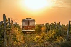 Oude bus onder de wijngaard stock afbeeldingen