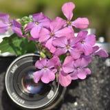 Oude camera met bloem stock foto's